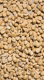 seleccion optica de cafe de microlotes p