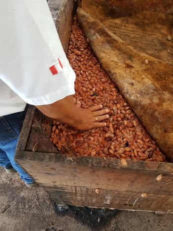 Fermentación del grano de cacao