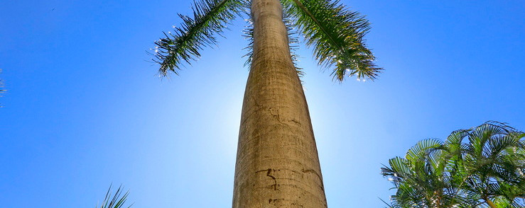 Palm Calm