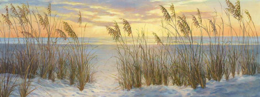 Seaoat Sunrise