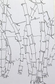 bamboo contours.jpg