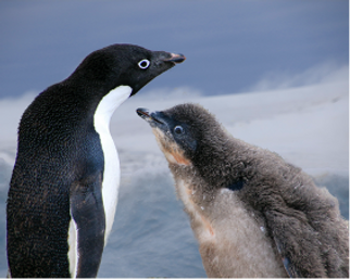 Penguin Picture1.png