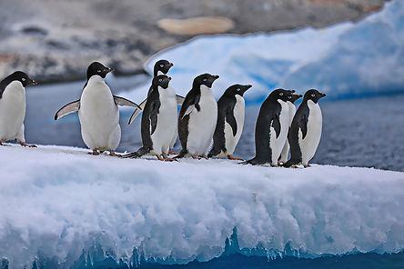 Penguin lineup .jpeg