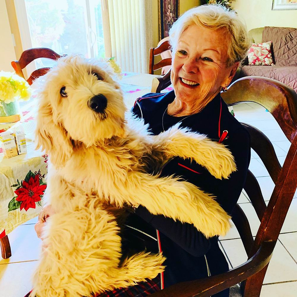 Our Therapy dogs bring us comfort and calm