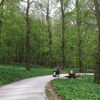 Pötzleinsdorfer - uma floresta dentro de Viena