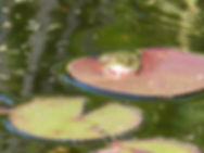 grenouille-bassin-yourte et verdure-Treignat