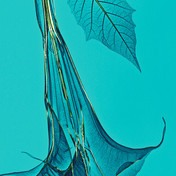 Lanuma poster