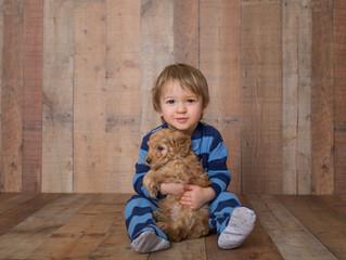 Cedar Bend Labradoodles - Five Weeks Old!