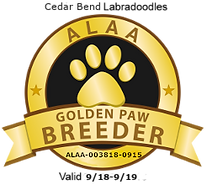 Cedar Bend Labradoodles ALAA Golden Paw