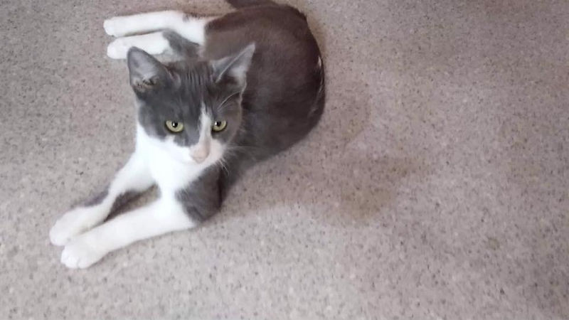 Katze Minako.jpg
