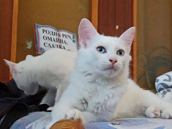 Katze Sarabi.jpg