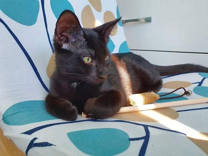Katze Cassy.jpg