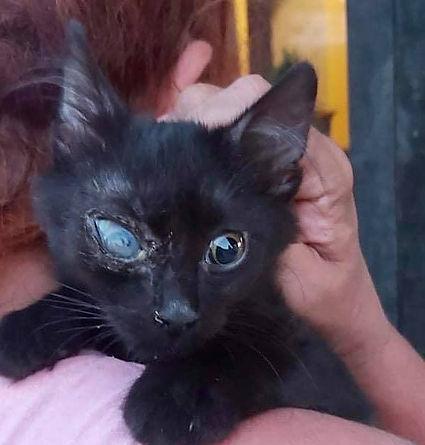 Katze Zula.jpg