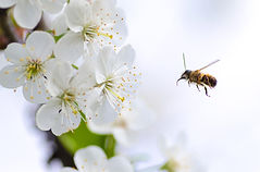 bee pollen2.jpg