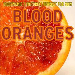 blood oranges.jpg