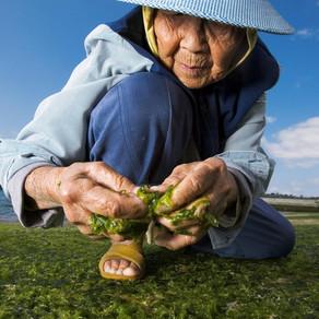 Holistic living key to longevity