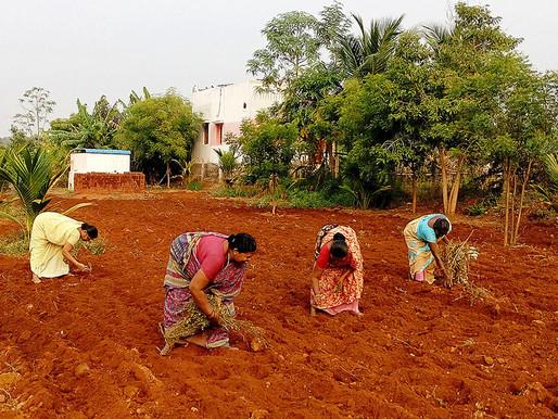 India's poorest revive an ancient grain