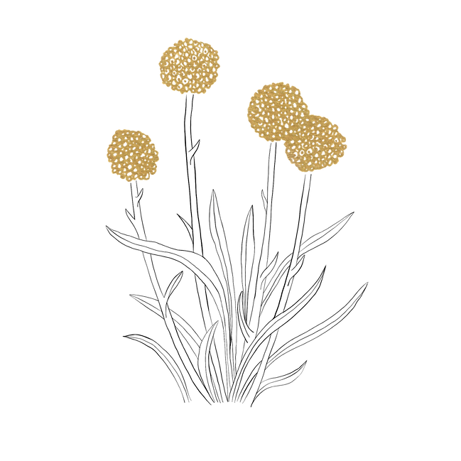 Billy buttons clean.png