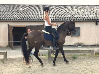 L'équitation du futur …