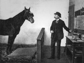 Du mental du cheval ...