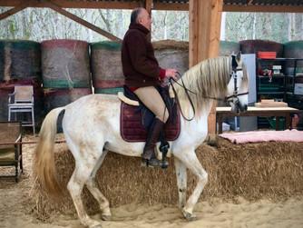 L'équitation holistique ...