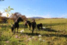 Jennifer MEGRE, centre équestre, pension, chevaux, poneys, centre équestre, écurie, équitation, 68, France, Mortzwiller