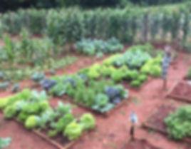 Horta orgânica fazenda da serra tribeca café especial