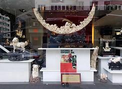 hong-kong-ivory.png