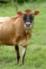 Produzir leite é um bom negócio?