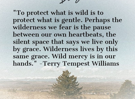 Quote of the Day: Wild Mercy & The Healing Power of Public Lands