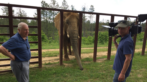 """Attenborough & the Giant Elephant"" BBC1"