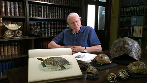 David Attenborough. Natural Curiosities for BBC4