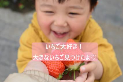 !いちご大好き.jpg