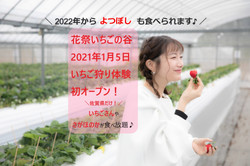 2021年1月いちご狩りオープン!_edited