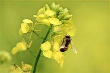 Bee_edited_edited.jpg