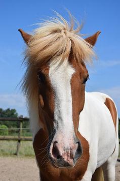 systemische therapie en paardencoaching