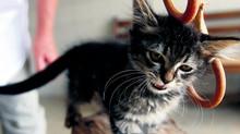 Nurser un chaton abandonné âgé de -4 semaines