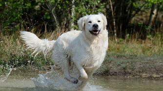 5 bonnes résolutions pour mon chien en 2017
