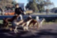 Chiens en route pour la clinique vétérinaire