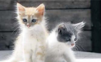 Le développement du chaton
