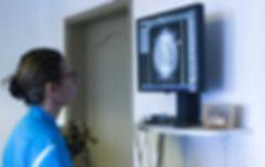 Radiographie d'une tortue Radiata