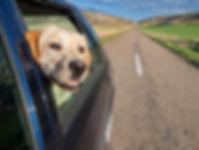 Chien en route pour la clinique vétérinaire