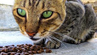 10 aliments dangereux pour votre chat