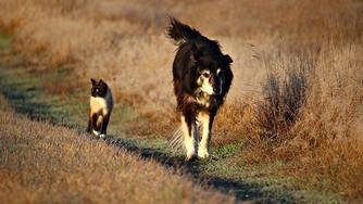 Comment prévenir les cancers génitaux du chat et du chien ?