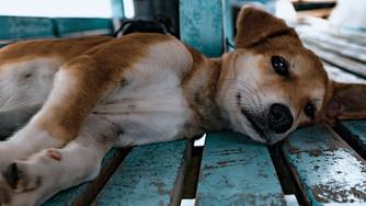 Dégagement d'urgence d'un chien