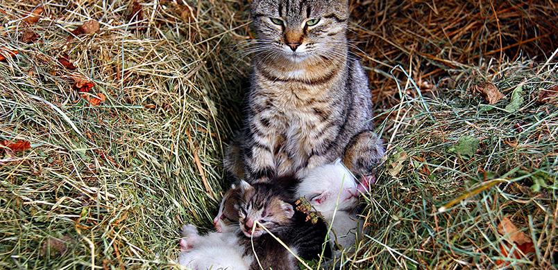 Portée de chatons avec leur mère