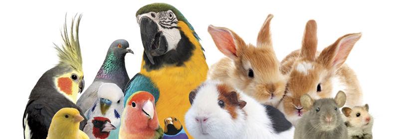 about_animals_770x270px_0.jpg