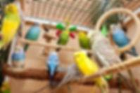 Oiseaux dans leur volière