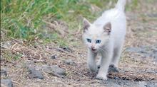 Sevrer un chaton abandonné âgé de plus de 4 semaines