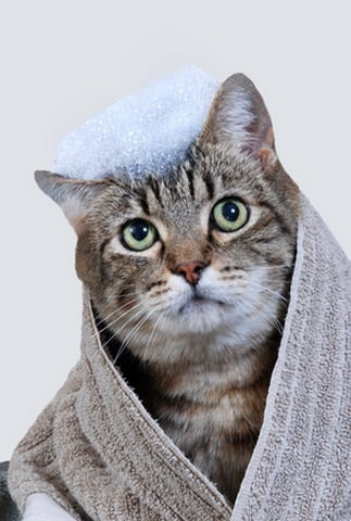 Comment entretenir l'hygiène de mon chat ?